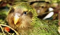 showimage Etwas bewegen - auf Kakapo.de.