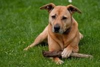 Ein Fall für die Hundeversicherung: Wenn Bello in den Straßenverkehr gerät