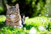 Katzenkrankenversicherung: häufige Krankheiten und die Heilbehandlung