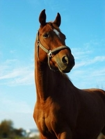 showimage Pferdehaftpflichtversicherung: Schwere Unfälle der vergangenen Tage dokumentieren die Notwendigkeit