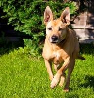 Hundehaftpflicht: Schutz für Hund und Herrchen im Schadensfall