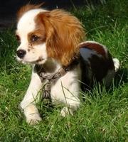 Hundekrankenversicherung: häufige Krankheiten und ihre Folgen