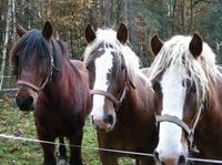 Für Ross und Reiter unverzichtbar: die Pferdehaftpflicht