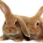 showimage Tierversuche - Nichts für Naturkosmetik