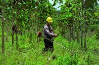 Entscheidende Kriterien eines rentablen Waldinvestments