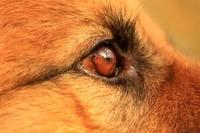 Neu gestaltet und noch übersichtlicher: Der Vergleichsrechner zur Hundehaftpflichtversicherung von vergleichen-und-sparen.de