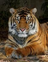 Bund Deutscher Tierfreunde begrüßt Vorstoß für Wildtierverbot im Zirkus