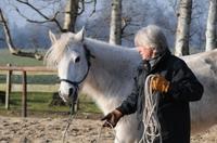 Wie Pferde Managern bei der Mitarbeiterführung helfen