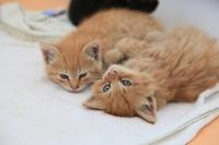 Katzenkrankenversicherung: Schutz zum Wohle der Katze