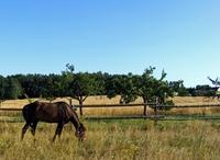 Pferdehaftpflichtversicherung: notwendiger Schutz auch bei kleinen Schäden