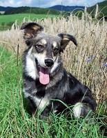 showimage Hundehaftpflichtversicherung: Schutz bei großen und kleinen Schäden