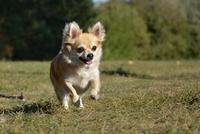 Die Hundekrankenversicherung bietet Schutz für ein langes und gesundes Leben