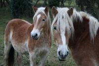Pferdehaftpflicht: Sicherheit rund um das Hobby Reiten