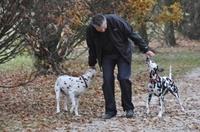 Hundehaftpflicht und Pferdehaftpflicht sind die wichtigsten Tierversicherungen auch im Jahr 2011