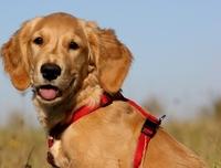 Die Hundeversicherung hilft, wenn Bello seinen Spieltrieb auslebt