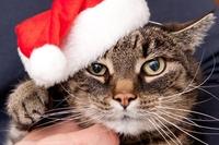 Katzen-OP-Versicherung: Über eine gesunde Katze freut sich der Mensch