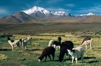 Mit dem Mietwagen in Chile reisen