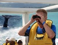 """Mit SeavisTours """"Whale Watching"""" in der Dominikanischen Republik erleben"""