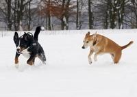 Die Hundehaftpflicht von vergleichen-und-sparen.de - verbesserte Leistungen schon ab 43,90 Euro