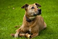 Die Hundehaftpflicht ist unverzichtbar, wenn Bello mal zuschnappt