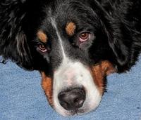 Hunde-Vergiftungsversicherung: Schutz für nur 4,95 Euro im Monat
