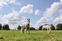 Die Pferdehaftpflichtversicherung bietet Schutz und Sicherheit im Schadensfall