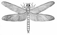 showimage Das größte Insekt aller Zeiten