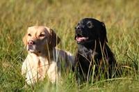 Mit der Hundekrankenversicherung umfassend für Bello sorgen