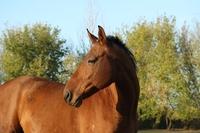 Die Pferdehaftpflicht ist auch oft für kleine Schäden nützlich