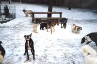 Bund Deutscher Tierfreunde rät zur Vorsicht beim Gassigehen in der Bibber-Kälte