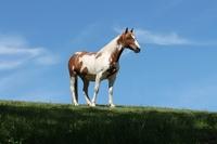 Die Pferdehaftpflichtversicherung schützt bei hohen Schadensersatzforderungen
