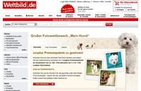 Fotowettbewerb: Herrlich hübsche Hunde