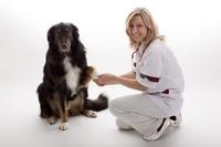 Hundekrankenversicherung: Sicherheit für Bellos Gesundheit
