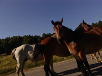 Pferdehaftpflicht: notwendiger Schutz im Schadensfall für den Pferdefreund