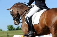 Mit der Uelzener Reiterunfallversicherung geschützt durch Wald und Wiesen