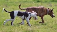 Hundeversicherung: Tragischer Vorfall in Oberhausen zieht nun weitere Kreise