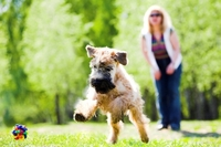 Die Hundeoperationsversicherung ist für Bello unverzichtbar