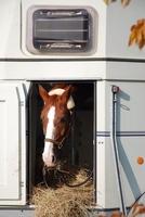 Die Pferdehaftpflicht der Uelzener ist unverzichtbar beim Transport des Pferdes