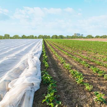 Vlies – Der perfekte Schutz für Ihre Jungpflanzen im Frühjahr