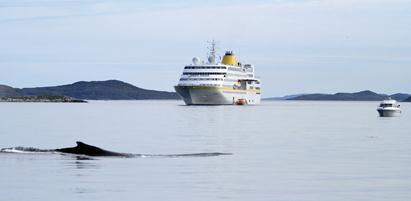Voll im Trend: Kreuzfahrten vom Mittelmeer bis nach Grönland