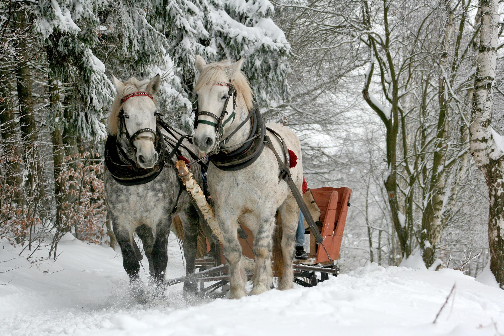 Sehnsucht nach Schnee