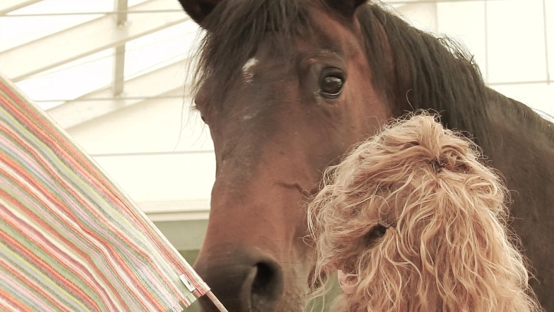 Video-Impressionen von einem besonderen Business-Workshop mit Pferden