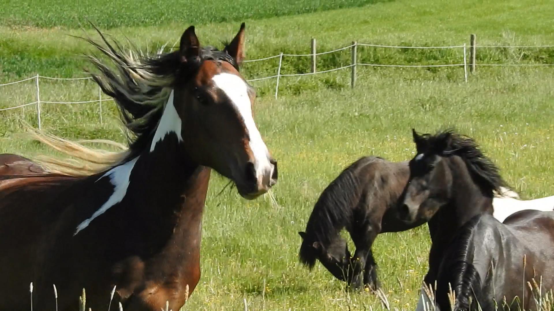 Sie können sich mit HorseDream einen Traum erfüllen.
