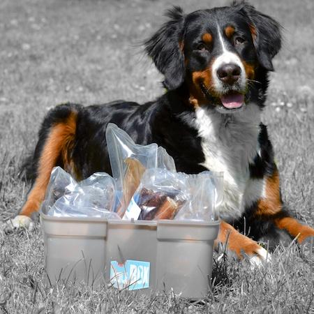 Jetzt gibt's was in die Schnauze: Kauartikel für Hunde aus der KauBox
