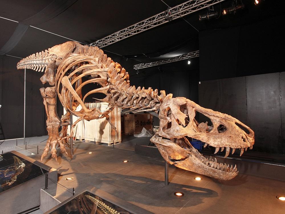 Das Original T. rex Skelett ab 23. Juni 2017 in Salzburg auf Welttournee