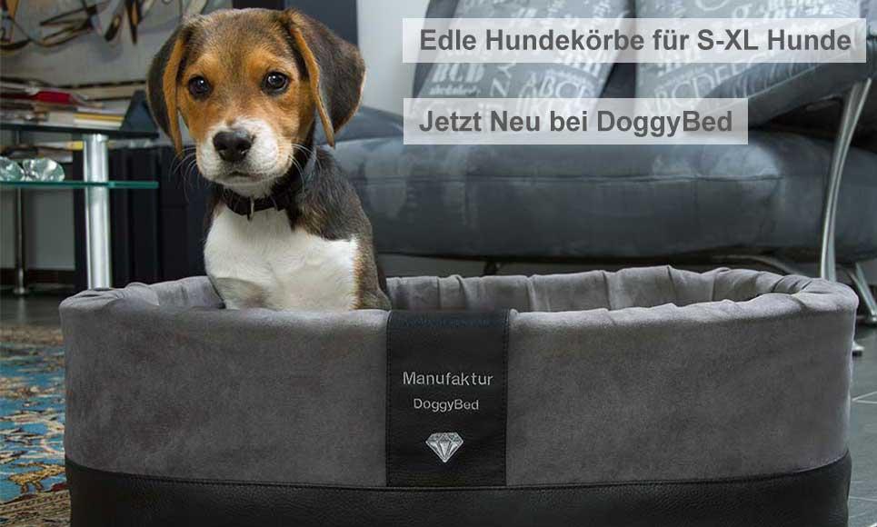 Kleine Hundebetten und Hundekörbchen: Genussvoller Schlaf für Toy Dog und Welpen