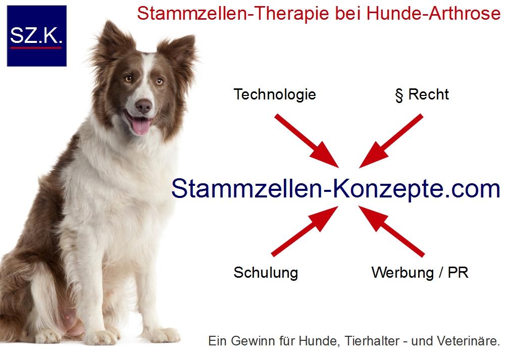 Neue Chance für Veterinäre: legale Stammzelltherapie bei Hunde-Arthrose stärkt Praxismarketing