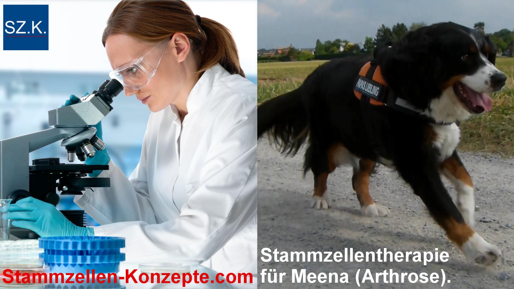 Fallbeispiel zur Behandlung der Arthrose beim Hund mittels Stammzellen