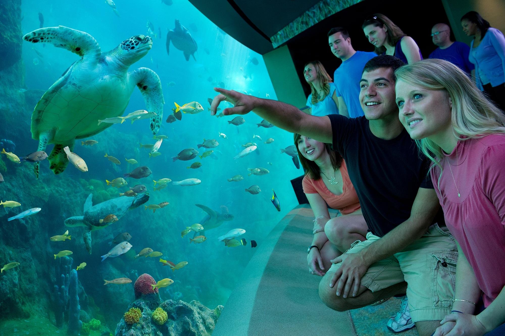 Florida: Ticket vorab in der Tasche spart f#xFCr Besuch von SeaWorld, Aquatica und Busch Gardens