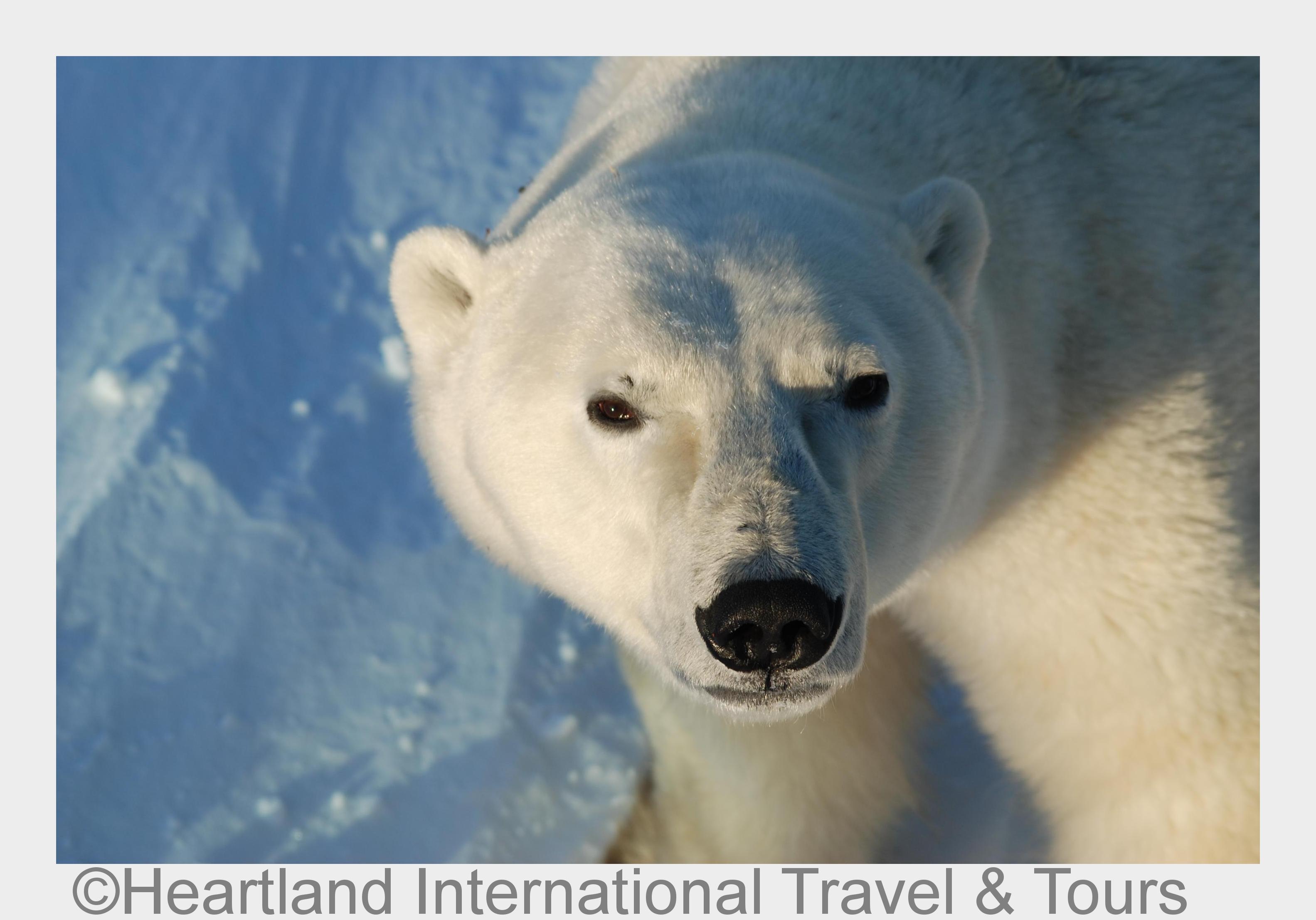 International Polar Bear Day am 27. Februar 2015
